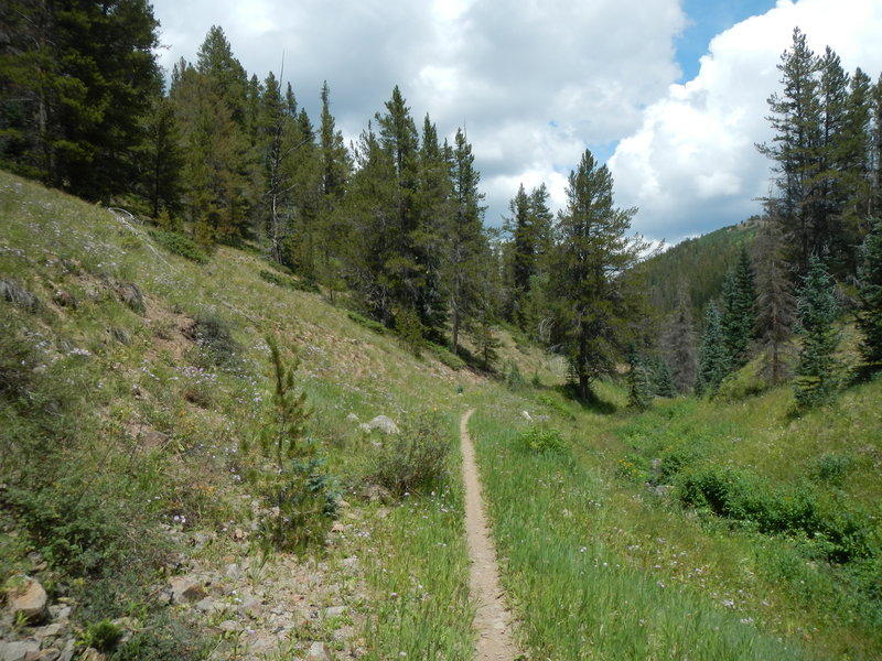 The south end of Tank Seven Creek Trail has a few smooth sections. This is one of them, near the Colorado Trail.
