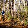 Riding through big open forests on the Bethel trails.