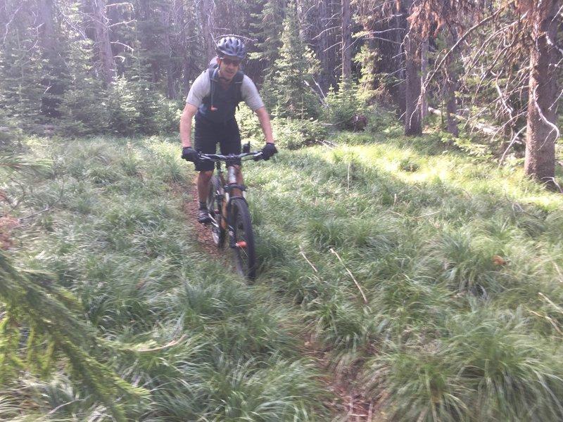 Mellow cruising through the bear grass.