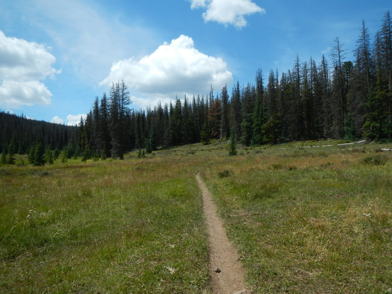 Junction of Forest Road No. 578 with the Colorado Trail, Segment 16.