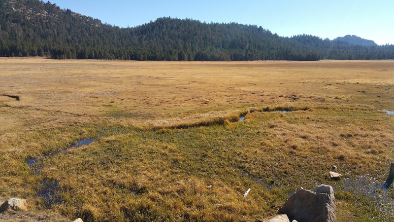 View of Big Meadow