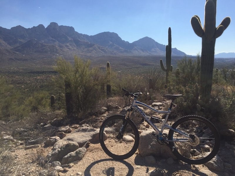 Exploring the 50-Year Trail north of Catalina State Park, in Tucson.