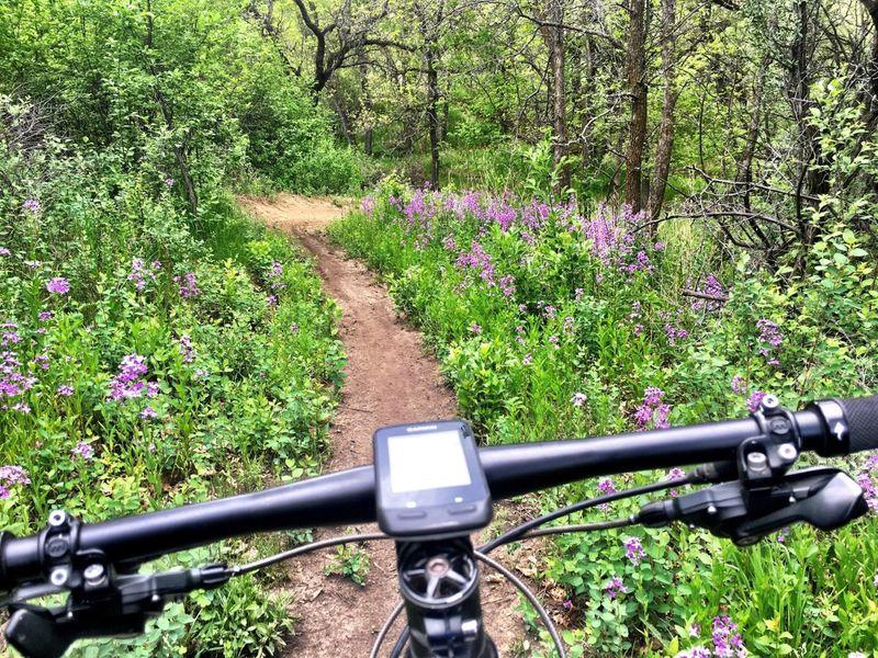 Epic Loop at Harmon Lake in late May.