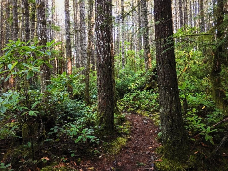 Beautiful singletrack and lush forests envelop the Beaver Pond Trail.