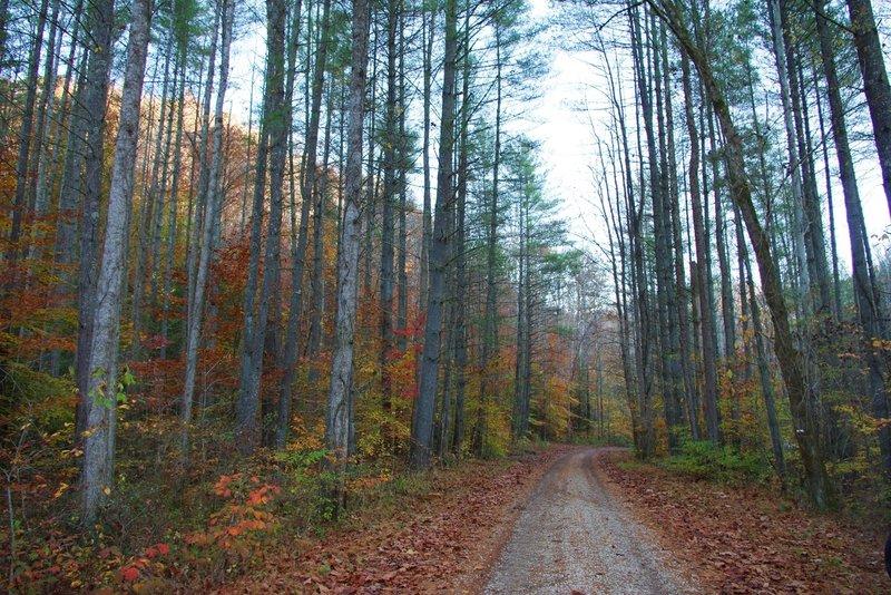 Fall foliage along Spaas Creek Road.