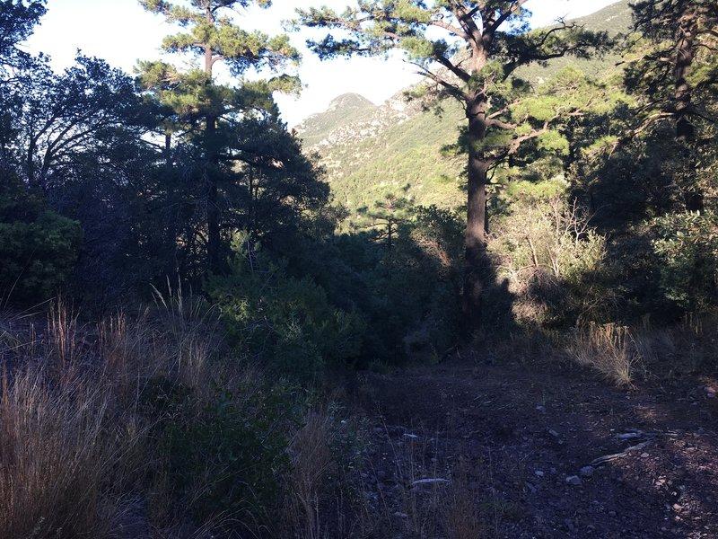 Huachuca Canyon Trail
