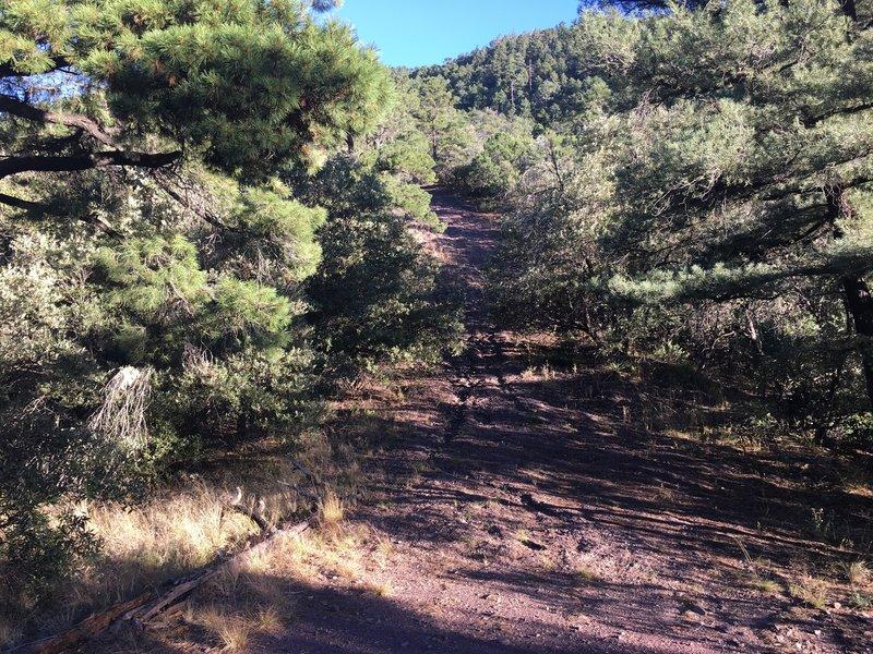 Huachuca Canyon Fire Break