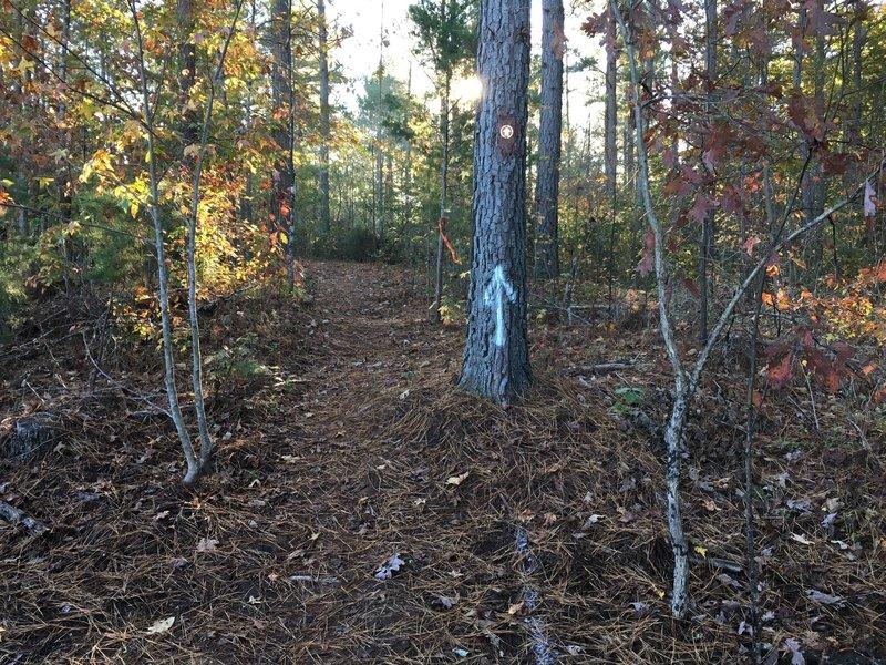 Trail crossing.
