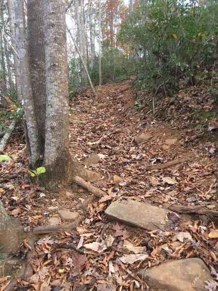 Difficult root climb on Wilkin's Way in Walnut Creek Park