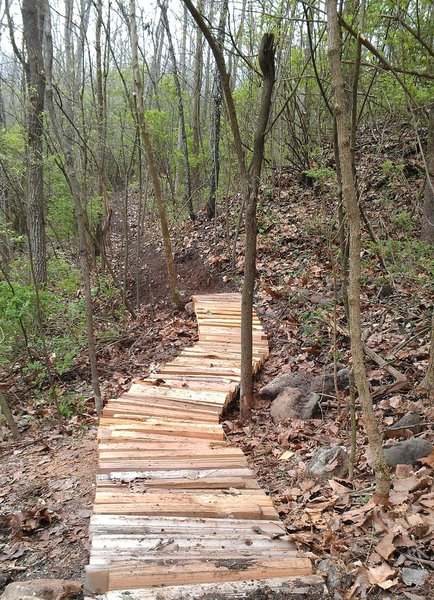 Elevated trail over natural springs.