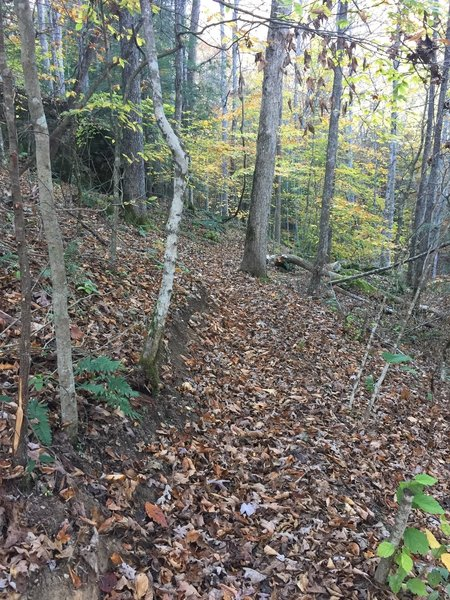You might have to search hard to find the trail under the leaves in the fall.