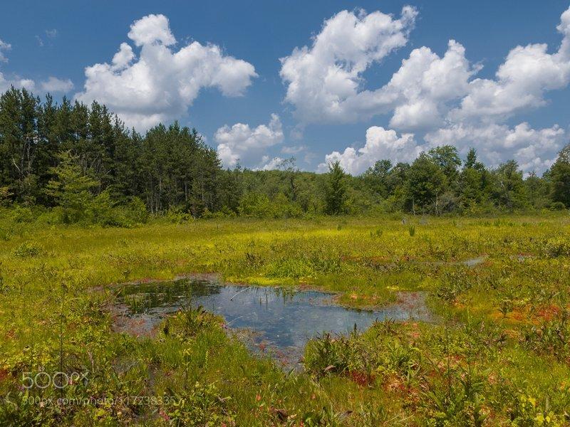 Cranesville Bog: The frost pocket swamp in Cranesville Maryland West Virginia border.