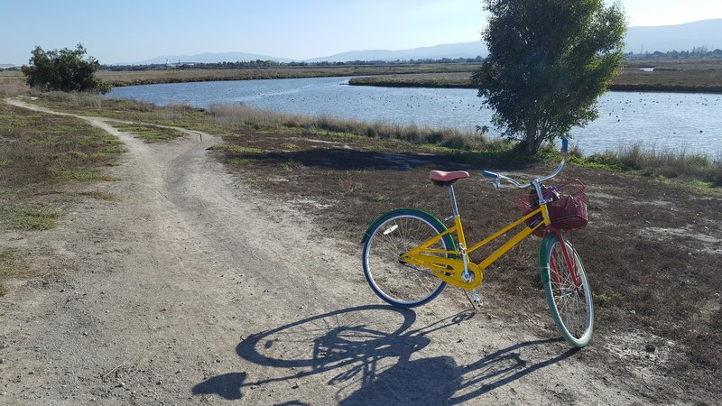 Google Bike spotted along Adobe Creek Loop Trail.