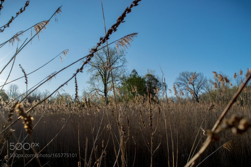 Through the Reeds: Peering through the reeds one morning in Barry Park.