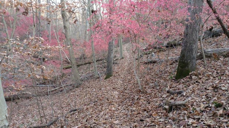 Boersma Trail