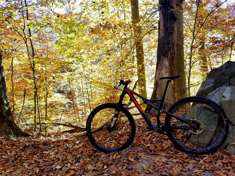 Fall biking is hard to beat in Patapsco Valley State Park.