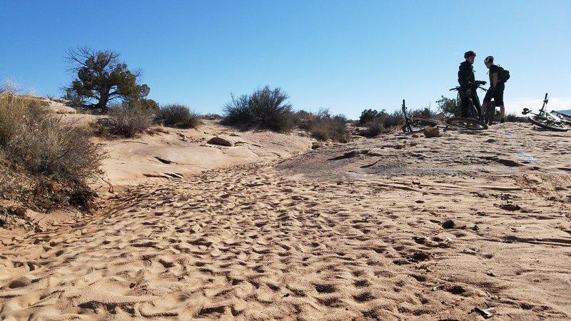 Recent rain created desert art in the sand.