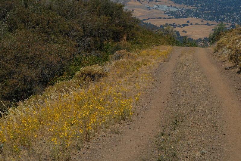 Prospector's Gap Fire Road makes for easy link-ups in Mount Diablo State Park.