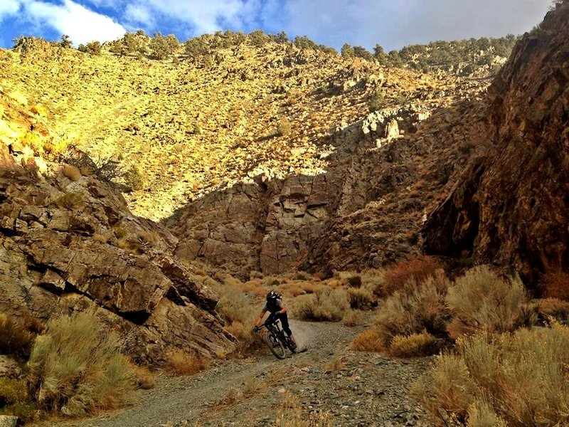 Carving turns on open singletrack through the bottom of Silver Canyon.