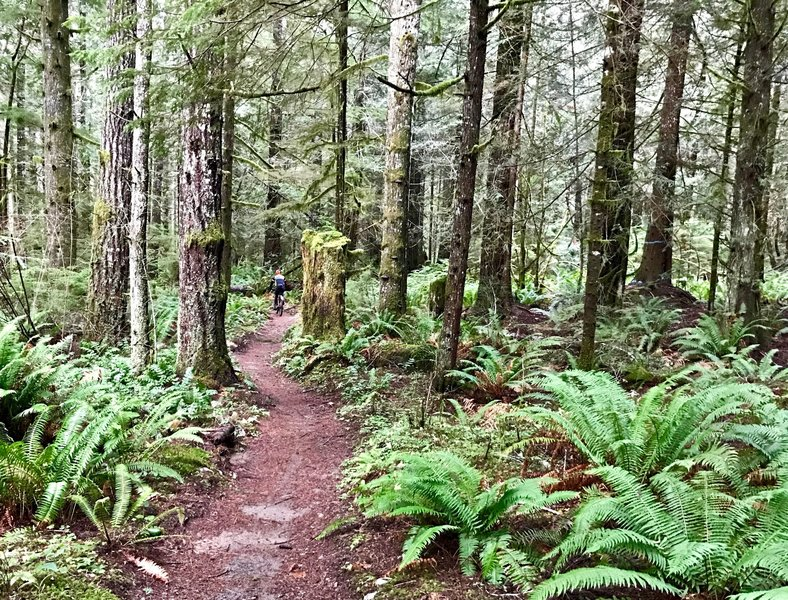 The OAT offers visitors a great taste of classic Pacific Northwest singletrack.
