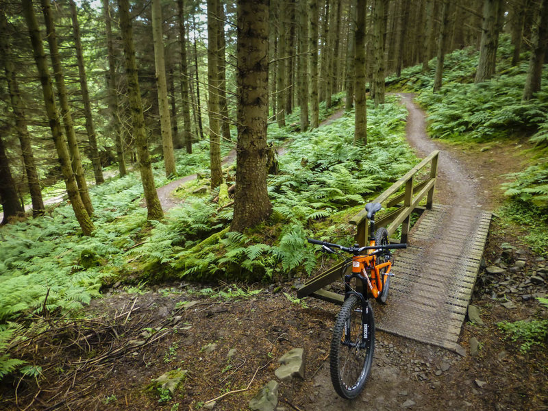 Switchbacks in the lush forest climbing the Red Route in Glentress