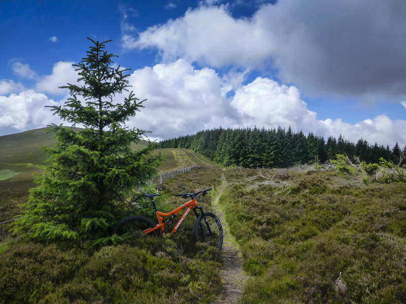 A fun section of singletrack in the Scottish countryside near Innenleithen