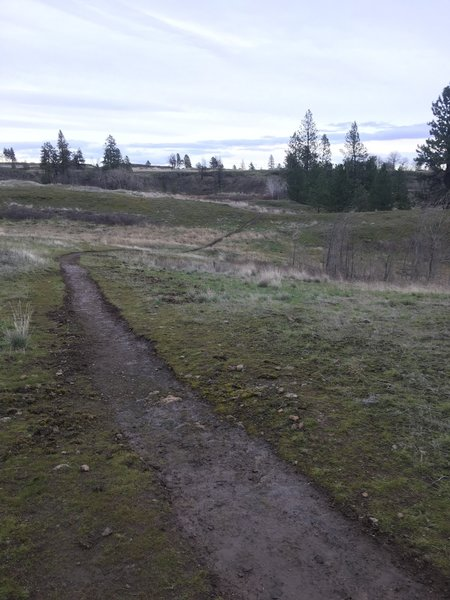Newly constructed singletrack from here back to the car. Thank you BLM!