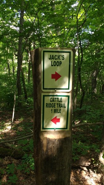 Cattle Ridge Trail sign post.