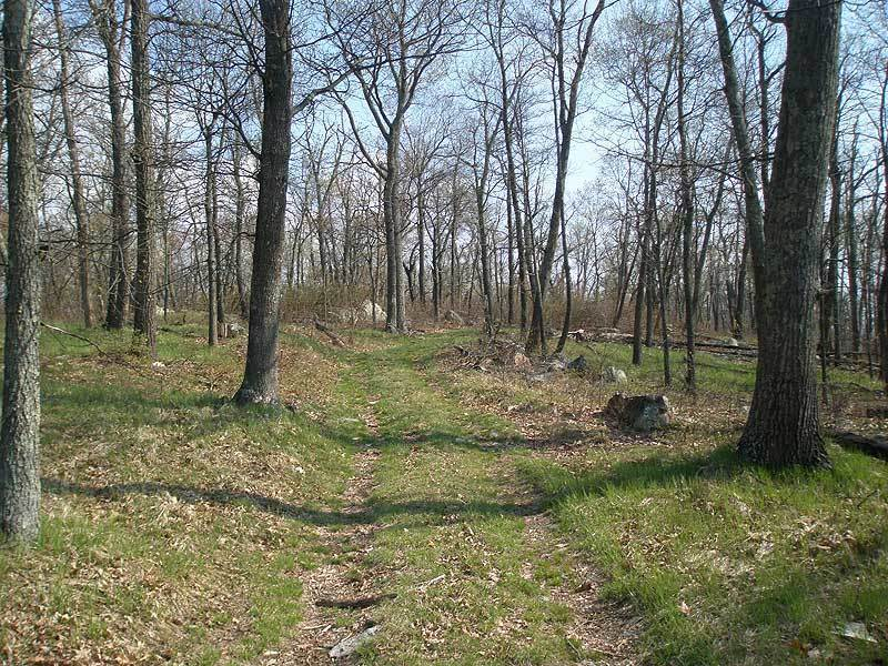 A good example of the Little Sluice Mountain Trail.
