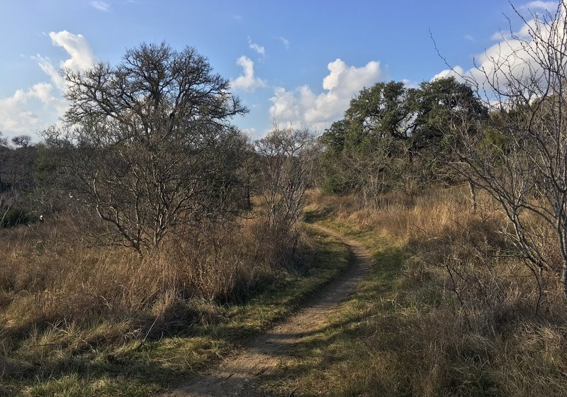 The smooth flowing singletrack of the Whistling Duck Trail.