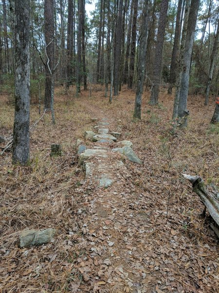 Rock Feature on the north end of the Bartram Trail.