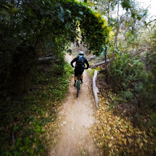 Typical of the singletrack along the Gabrielino Trail trail and the Arroyo.