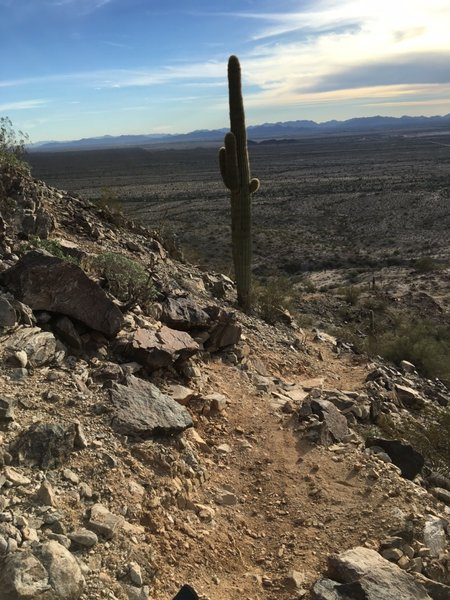 One of many downhill features on the Estrella Foothills Loop.