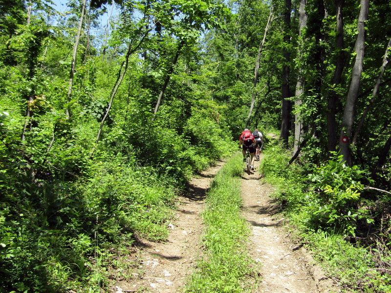 Pedaling through the amazing forest near Tronoša.