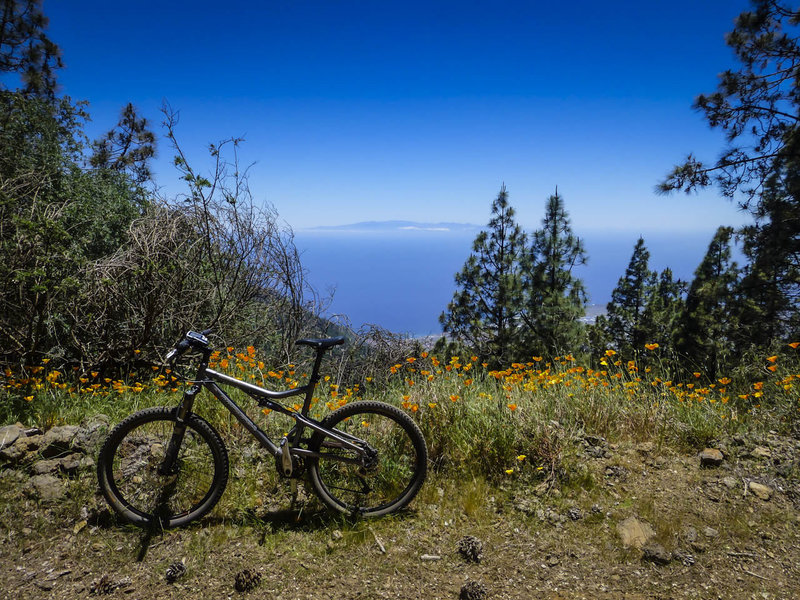 The Pista Boca del Valle trail features views of the Atlantic Ocean, Gran Canaria Island, and sometimes spring wildflowers too.