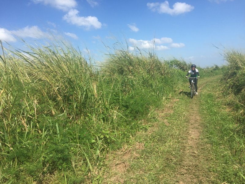 The Talahiban Trail is a smooth doubletrack through grassy fields.