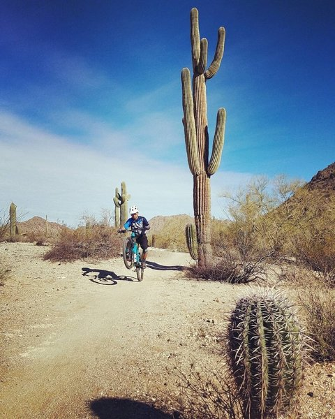 A rider wheelies beside a monster saguaro.