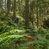 Cody Olsen flies through the ferns in Jurassic Park.