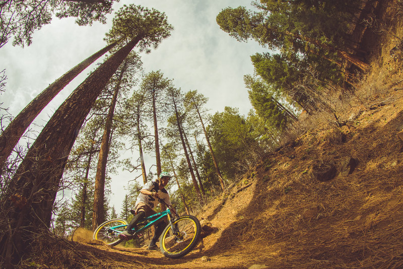 A rider drifts the open, flowy singletrack of the Hermosa Creek Trail as it weaves through the pine-littered forests of Durango.