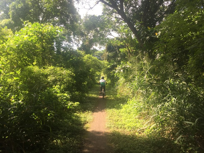 Nuvali Trail 2's dense vegetation makes for a magnificent experience.