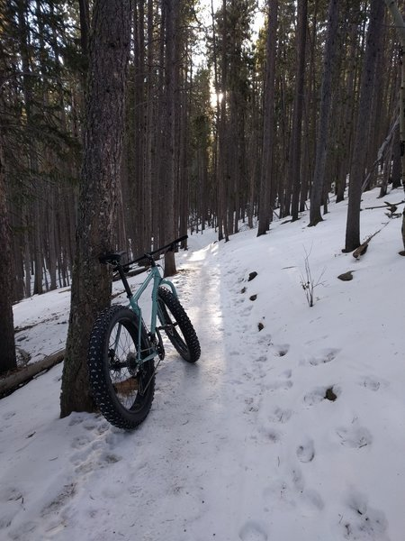 Moderate grades and packed snow can make Sunny Aspen a great fat bike option during the winter.