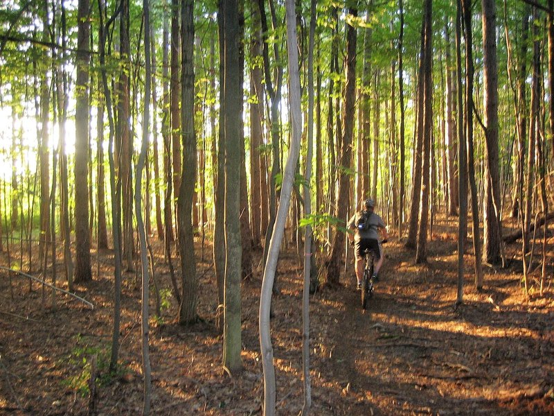 Rooty cross-country-singletrack bliss awaits in Oakley Corners State Forest.
