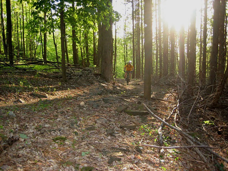 A rider cruises along the blue trails in Jenksville State Forest.
