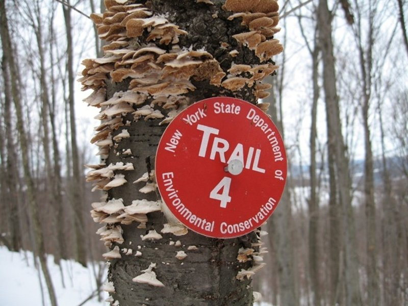 A NYS DEC trail marker denotes Red 4 in Jenksville State Forest.