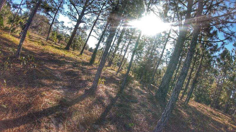 Dance through the pines on Lokosee Loop!