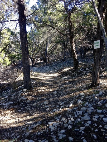 Look for this junction between Upper Wagon Trail & Zip Trail.