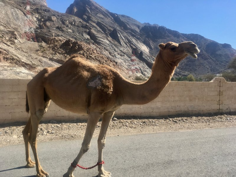 Friendly local fauna greets me along the Trans Hajar route.