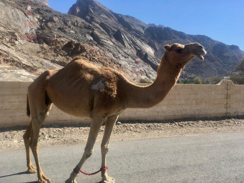 Friendly local fauna greets me along the Trans Hajar route.