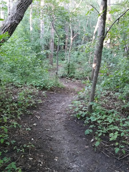 Enjoy smooth trails and winding turns in Eastwood Park.