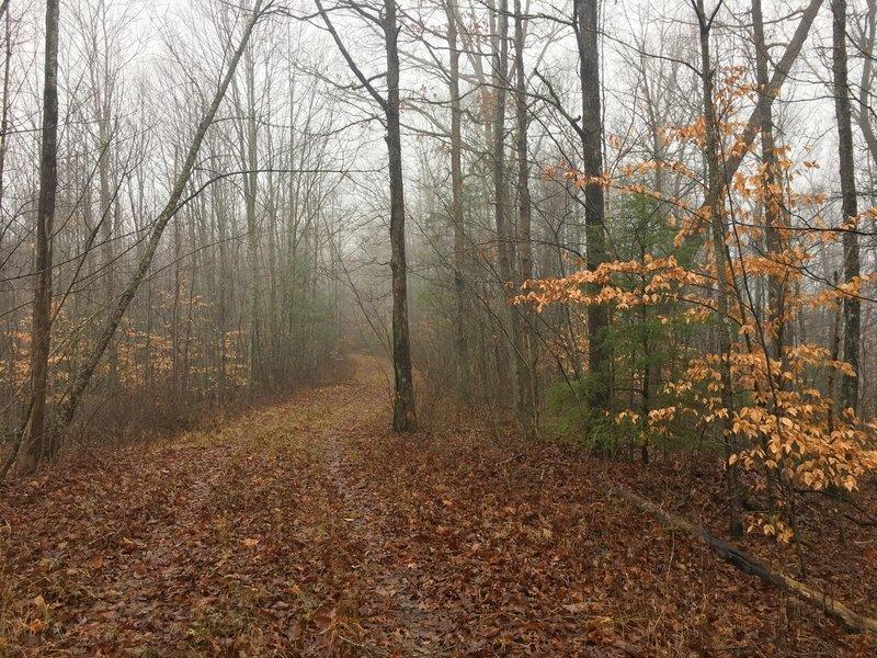 A misty morning graces my ride along FR 173.